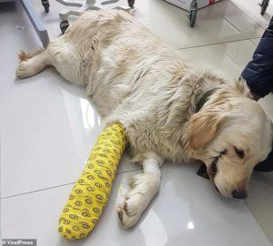 Lucky Pup Survives Vicious Attack by Cowardly Bullies