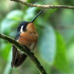 Counting Birds in the Cloud Forests of Coronado, Costa Rica