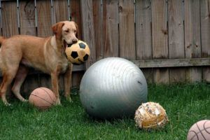"Dog Takes ""Smug"" Photo After Swallowing Costly Ball"