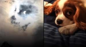 Woman Swears Image From The Solar Eclipse Matches Her Dog