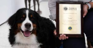 "1 Millionth Ever ""Canine Good Citizen"" Brings Comfort to Grieving Families"