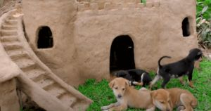 Rescuer Builds Puppies An Elaborate Castle With A Moat