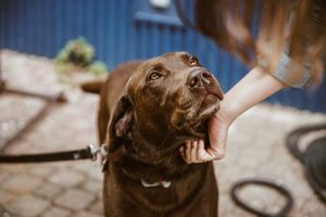 10 Times That Probiotics Are Especially Beneficial To Your Dog