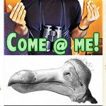 Come Me: Don't Mourn for Extinct Birds