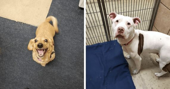 One Woman's Final Action Changed The Lives Of Every Dog In Ohio Shelter