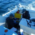 Whale Conservation and Research in Gloucester, MA