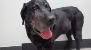 Senior Dog Makes Miraculous Recovery After Being Shot In The Face
