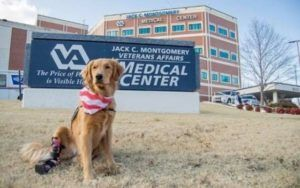 VA Hospital Welcomes Disabled PTSD Service Dog