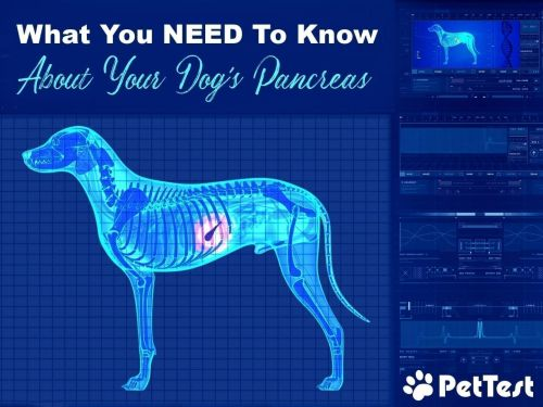 What You NEED to Know Now About Your Dog's Pancreas