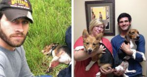 Veteran Saves Beagle That Was Hit By Car On Interstate