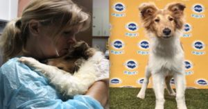 Collie Puppy With A 'Ruff' Past Wins Puppy Bowl