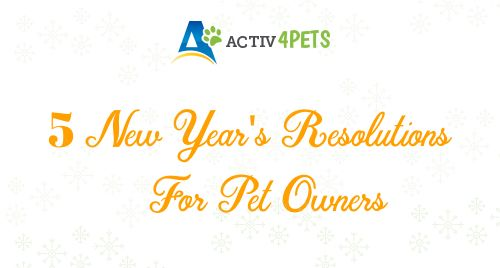 5 New Year's Resolutions For Pet Owners
