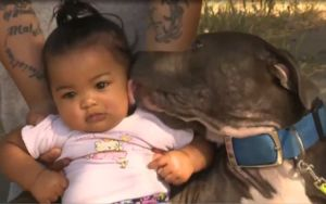 Pit Bull Alerts Family To House Fire & Begins Dragging The Baby To Safety
