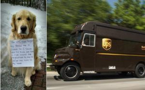 Dog Stows Away On UPS Truck After Driver Fails To Give Him A Treat