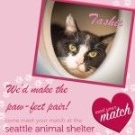 Seattle Animal Shelter reminds pet owners to protect pets from the heat