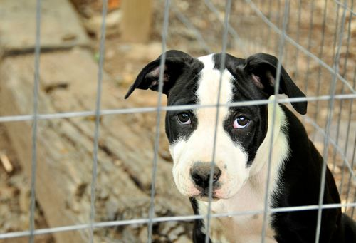 Cities Are Fighting Back Against Puppy Mills - But Some States Won't Let Them