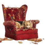 Staying Safe with Your Pet Who has Behavioral Issues