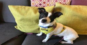 Hotels Help Local Rescues Become Lobby Dogs and Find Forever Homes