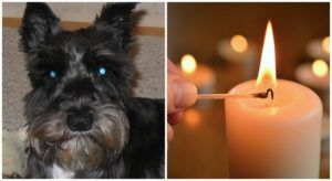 Grieving Pet Parents Start Group To Provide Support Before, During, And After Pet Loss