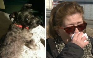 Woman Blames Tainted Dog Food For The Death Of Her Beloved Schnauzer