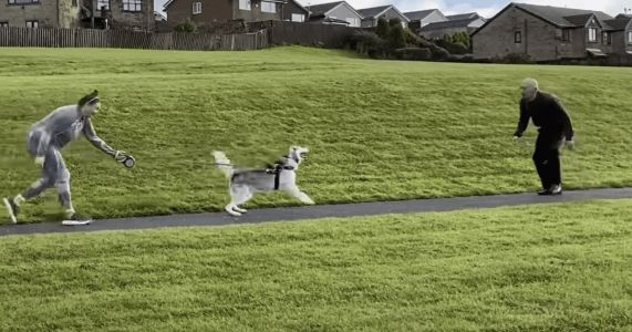 Man Disguises Himself To Prank Huskies, And Gets Hilarious Results!