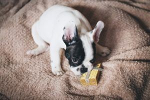 Report Finds That Around 80% Of Online Ads For Pets Are Scams