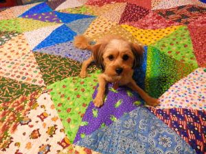 Woman Creates Stunning Memorial Quilt Using Her Dearly Departed Dogs' Scarves