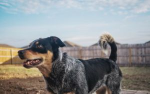 6 Ways To Improve Your Dog's Health And Happiness