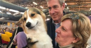 Westminster Show Dog Loses In Ring But Wins Big Against Cancer