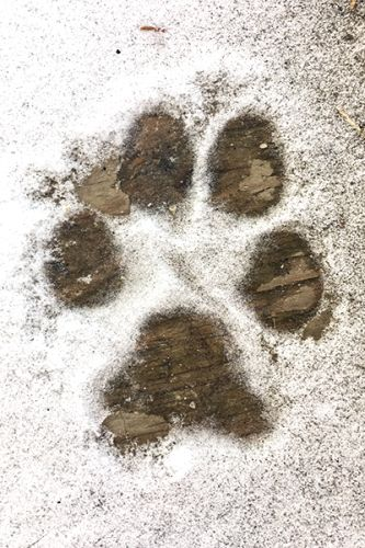 Wordless Wednesday: I'm a Sucker for Dog Footprints
