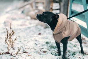 The Truth About Dog Coats And Boots: Does Your Dog Actually Need Them?