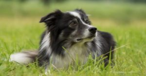 Voters Choose Perfect Name For Goose-Control Dog