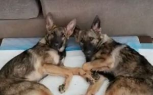 Terminally Ill Sister-Pups Need Your Help To Get The Most From Their Remaining Days