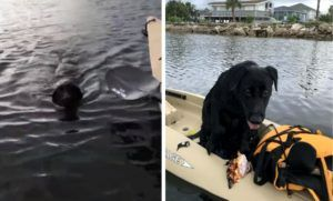 Fly Fisherman Reels In Black Lab Adrift On Galveston Bay