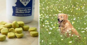 """My 10 year old golden hikes 4 miles a day, LOVES these turmeric joint chews"""