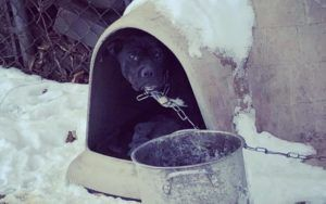 5 Ways You Can Help Dogs Left Outside In The Cold