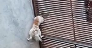 Escape Artist Dog Caught on Camera Showing Up Houdini Himself