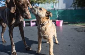 When It Comes To Health, Mixed And Purebred Dogs Aren't Always The Same