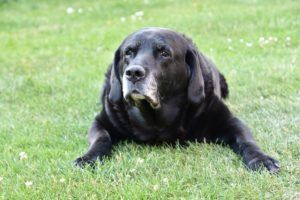4 Reasons To Invest In A Quality Bed For Your Senior Dog