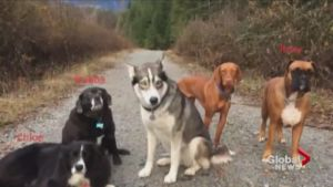 3 Dogs Help Injured Dog Walker Survive 2 Days In The Wilderness