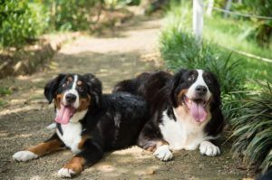5 Signs Your Dog Would Enjoy Another Pup At Home