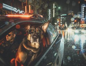 Vancouver Police K9s Star In Calendar To Fight Cancer