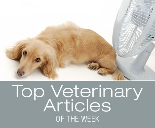 Top Veterinary Articles of the Week: Heat Stroke, Bufo Toads, and more