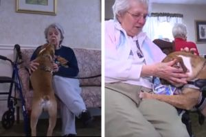 Bulldog Puppy Spreads Happiness To Seniors With Alzheimer's Disease