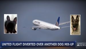 United Faces Another Dog Dilemma After Dog Placed On Wrong Flight
