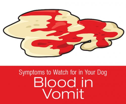 Symptoms to Watch for in Your Dog: Blood in Vomit