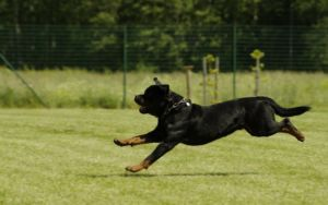 8 Strongest Dog Breeds
