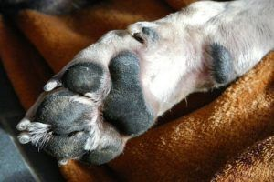 Here's The Reason Why Your Dog's Feet Smell Like Fritos