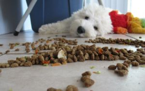 5 Strange Eating Habits And What They Mean About Your Dog