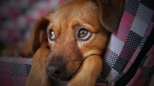 The First 10 Lessons To Teach Your New Puppy